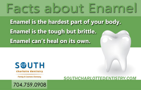 Tooth Enamel, Teeth, Unique Teeth Facts, Dental Facts, Oral Health, Fun Dentistry, Dentist, South Charlotte Dentistry, Charlotte NC