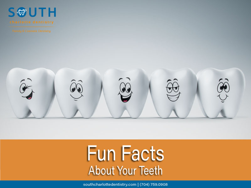 Fun Facts About Your Teeth